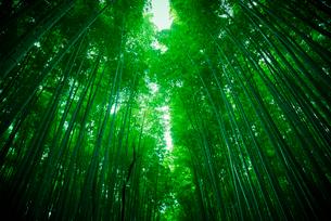 嵯峨野の竹林の写真素材 [FYI01403629]