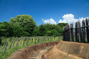 吉野ヶ里歴史公園の逆茂木の写真素材 [FYI01403733]