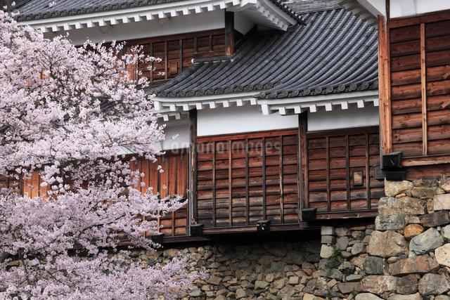 桜咲く福知山城の写真素材 [FYI01403825]