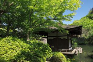 新緑と和歌山城の紅葉渓庭園の写真素材 [FYI01404067]