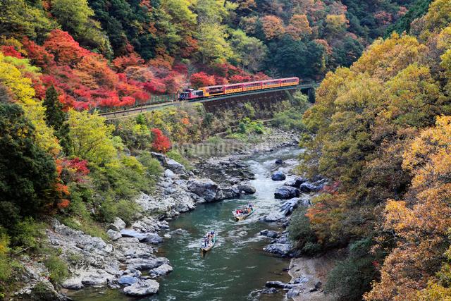 紅葉と嵯峨野トロッコ列車の写真素材 [FYI01404229]