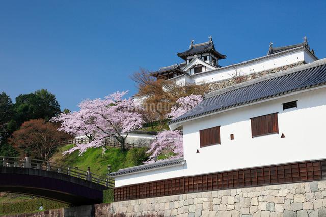 桜咲く福知山城の写真素材 [FYI01404348]