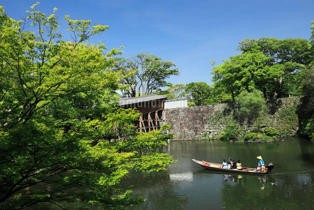新緑と和歌山城の紅葉渓庭園の写真素材 [FYI01404637]
