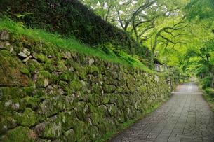 坂本の穴太衆積みの石垣の写真素材 [FYI01404675]