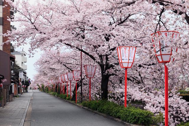 桜咲く祇園宮川町の写真素材 [FYI01404817]