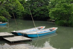 柳川下りのどんこ船の写真素材 [FYI01404842]