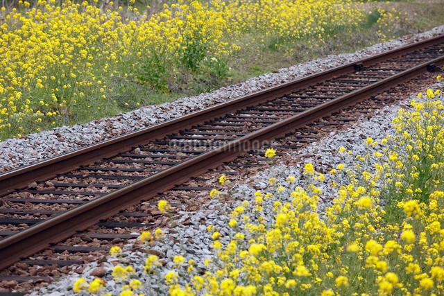 線路と菜の花の写真素材 [FYI01405337]