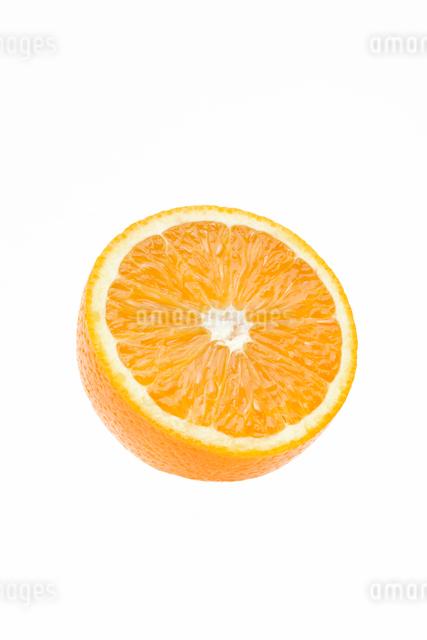 オレンジの写真素材 [FYI01405639]
