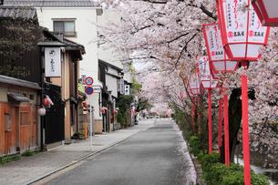 宮川町の町並みと桜並木の写真素材 [FYI01405999]