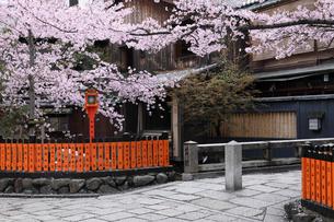 桜咲く祇園白川の写真素材 [FYI01406003]