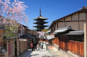 桜咲く八坂の塔と町並みの写真素材 [FYI01406263]