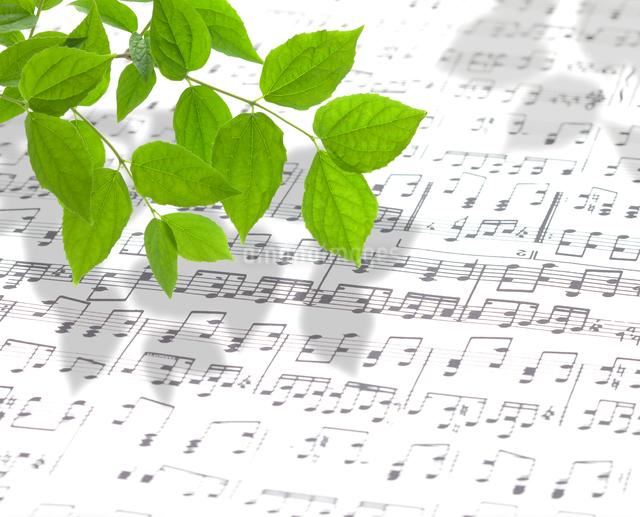 楽譜と葉の写真素材 [FYI01406525]