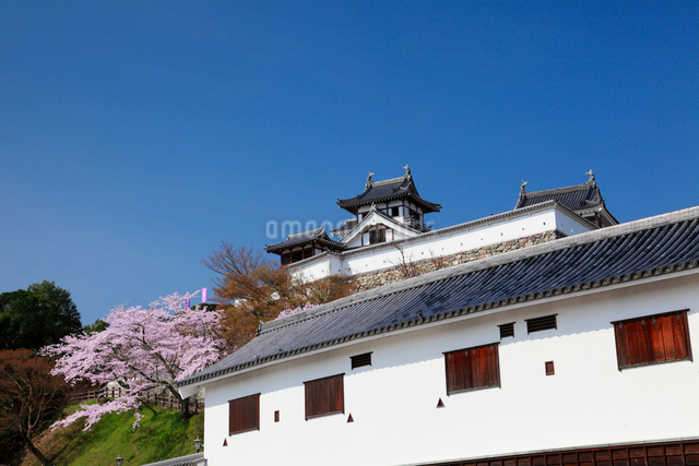 桜咲く福知山城の写真素材 [FYI01406558]
