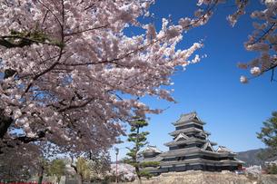 桜咲く松本城の写真素材 [FYI01406564]