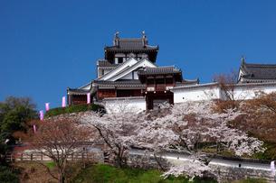 桜咲く福知山城の写真素材 [FYI01406680]