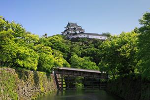 新緑の和歌山城と御橋廊下の写真素材 [FYI01406718]