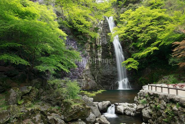 新緑と箕面大滝の写真素材 [FYI01406825]