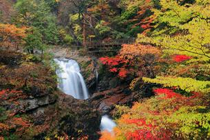 紅葉のみたらい渓谷の写真素材 [FYI01407402]