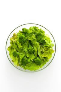 グリーンサラダの写真素材 [FYI01407639]
