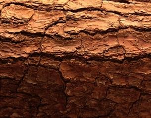 木の模様の写真素材 [FYI01408146]