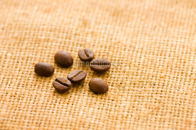 コーヒー豆の写真素材 [FYI01408228]