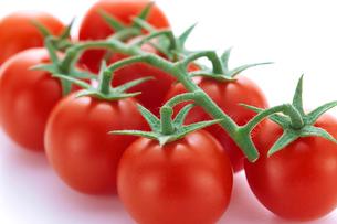 房付きトマトの写真素材 [FYI01408532]