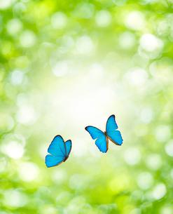 新緑と蝶の写真素材 [FYI01408870]