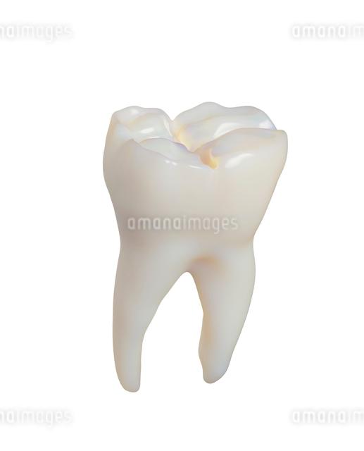 歯の写真素材 [FYI01409341]