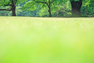 公園の芝生の写真素材 [FYI01409909]