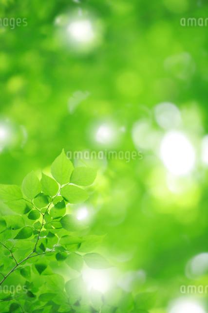 新緑の写真素材 [FYI01410059]
