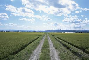 田園風景の写真素材 [FYI01410323]