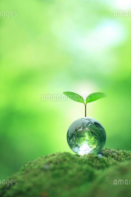 ガラスの地球と木の芽の写真素材 [FYI01410922]
