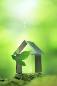 ガラスの家と新緑の写真素材 [FYI01410992]