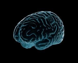 脳の写真素材 [FYI01411300]