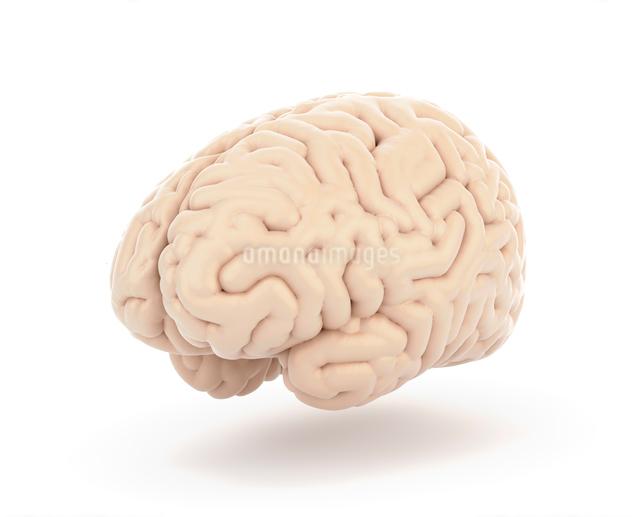 脳の写真素材 [FYI01412347]