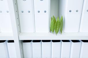 キャビネットに立つ月桂樹の葉の写真素材 [FYI01413837]