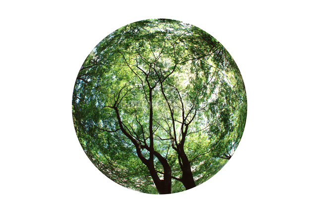 新緑の写真素材 [FYI01413874]