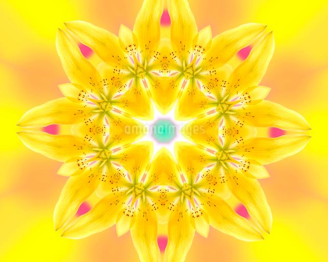 黄色いユリの花 (万華鏡)の写真素材 [FYI01413990]