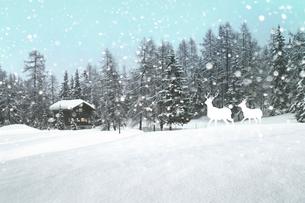 雪景色とトナカイの写真素材 [FYI01414129]