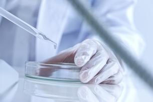 シャーレに薬品を入れる研究者の写真素材 [FYI01414156]