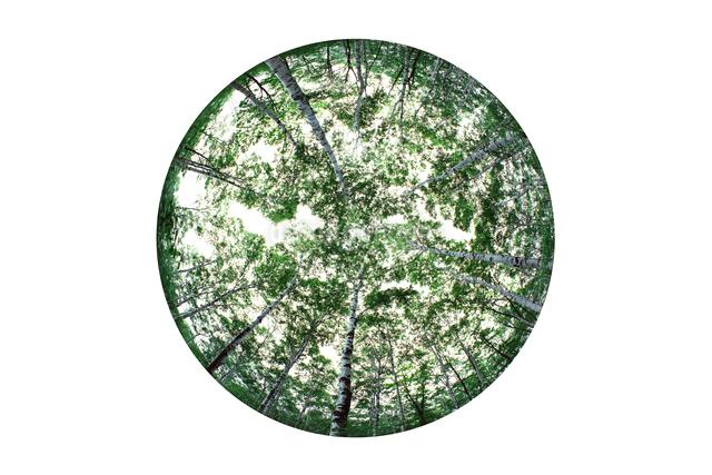 白樺林の写真素材 [FYI01414239]