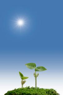 新芽と太陽の写真素材 [FYI01414268]