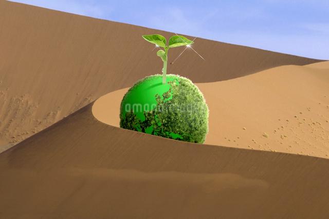 ナミブ沙漠と新芽の写真素材 [FYI01414326]