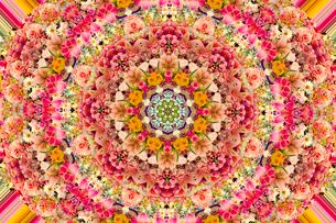 色々の花のパターンの写真素材 [FYI01414505]