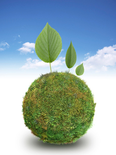 青空背景に草の球体の上に三枚の新緑の葉のイラスト素材 [FYI01415142]