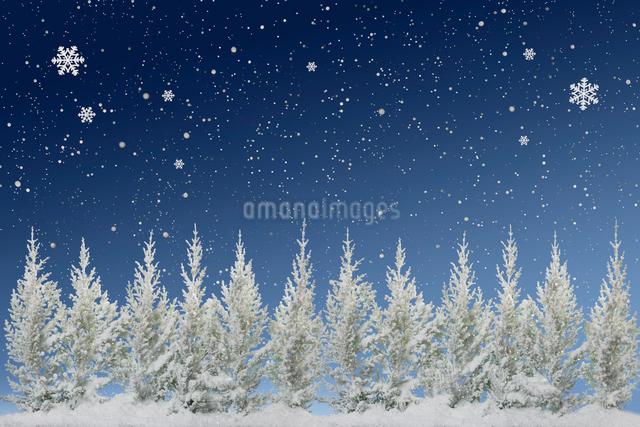 ゴールドクレストの樹氷と雪の結晶の写真素材 [FYI01415179]