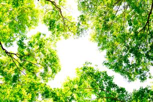 新緑の木々の写真素材 [FYI01415277]