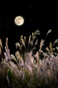 満月とススキの写真素材 [FYI01415313]
