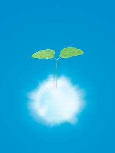 青白く発光する球体から伸びる新芽のイラスト素材 [FYI01415455]