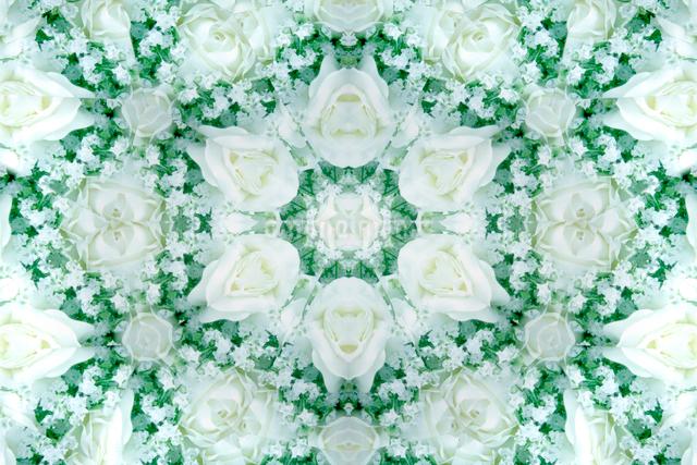 白いバラの花(万華鏡)の写真素材 [FYI01415817]